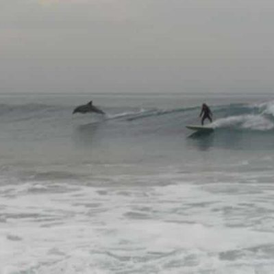 Surf with dolphins
