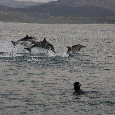 ocean safairies